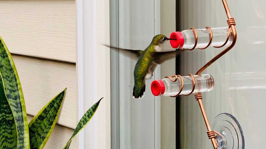 hummingbird at copper feeder against window