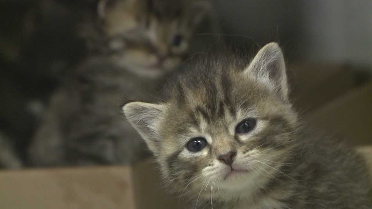 16 Kittens Join More Than 300 Kittens At Arl