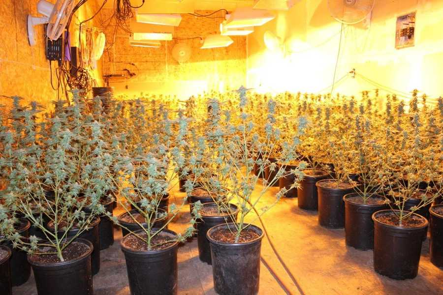 Photos: Deputies uncover 3 tons of pot in Butte County