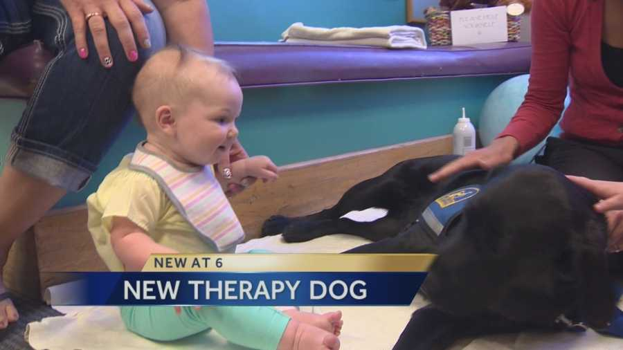 "Sick children at Sutter Hospital now have a new doctor to help them feel better -- well, sort of. This one has four legs and a tail. Meet Marty, a black lab/golden retriever mix; the newest therapy dog for pediatric patients at Sutter Children's Center. A special ""Marty Party"" was held for the animal on Tuesday, so that kids, nurses and doctors could meet the newest member of the hospital's pet therapy program."