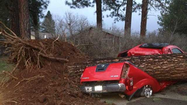 A truck crushed by a tree in the town of Burney in Shasta County.