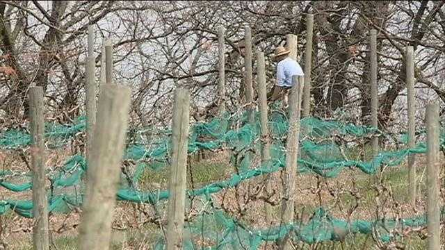 Owners of a Washington County vineyard say they have $10,000 on the line with a season's worth of grapes at risk.