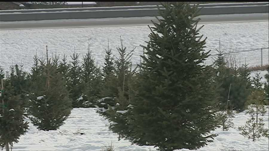 A number of local Christmas tree growers have had to shut down early because they've run out of trees.