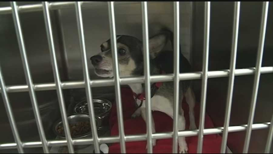 One animal shelter in our area is testing hundreds of dogs after a puppy tested positive for a deadly disease.  Brett Rains tells us what you need to       know if you plan on adopting a dog from that shelter.