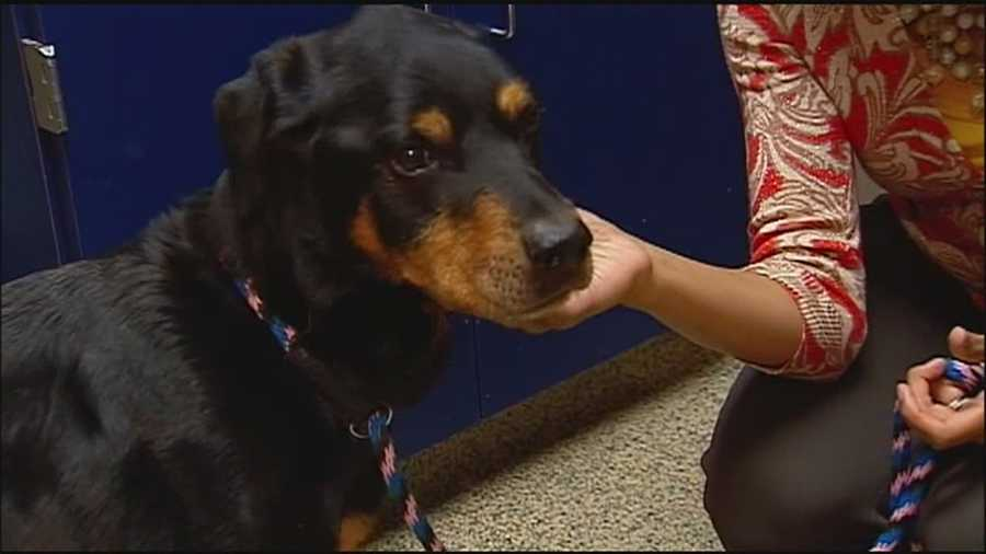A blood transfusion from a dog has saved another dog's life at the Great Plains SPCA.