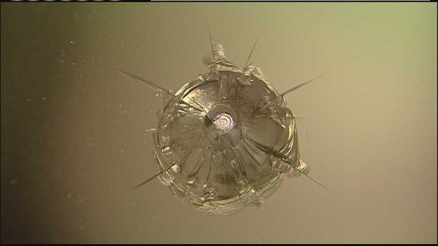 Police in Shawnee are trying to track down the vandal who has been shooting out the windows of cars and businesses with a BB gun.