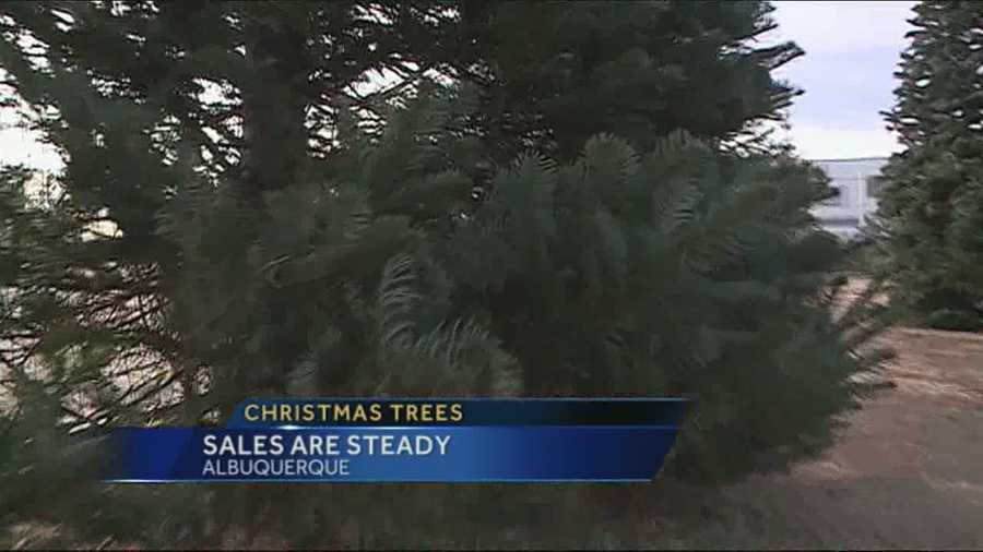 How's the Christmas tree business doing since there are still plenty of full lots in Albuquerque?