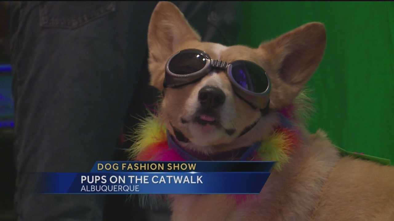 Several canines strutted their stuff across the stage in the Reel Dog Fashion Show and Reception.