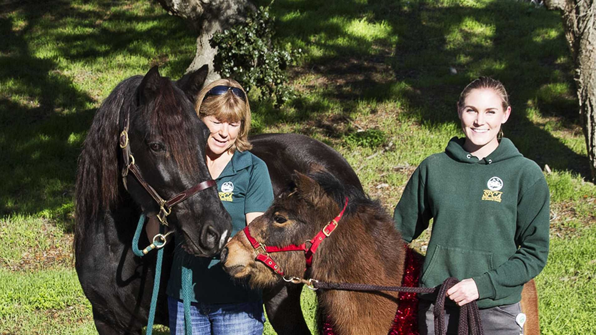 Bradley, a 7-year-old pony, and Bella Donna, a warmblood mare, are among the seven horses ready for new homes.