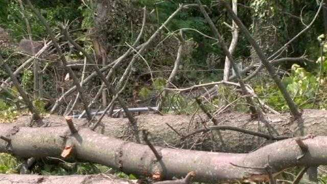 Toppled Trees In Baltimore Co
