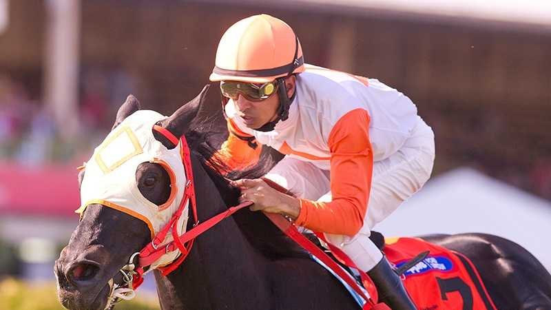 The $100,000 Jim McKay Turf Sprint could be a singular showcase for Maryland bred Ben's Cat.