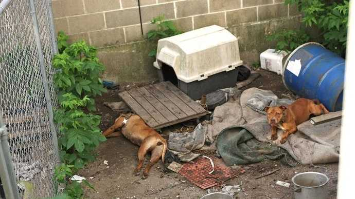 Police found a dead pit bull and three others living in squalid conditions while visiting the Montello Street home of Monje Joseph on July 1, 2012.