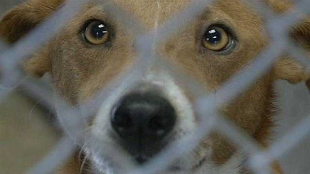 Shelter May Have To Euthanize Dogs Due To Overcrowding