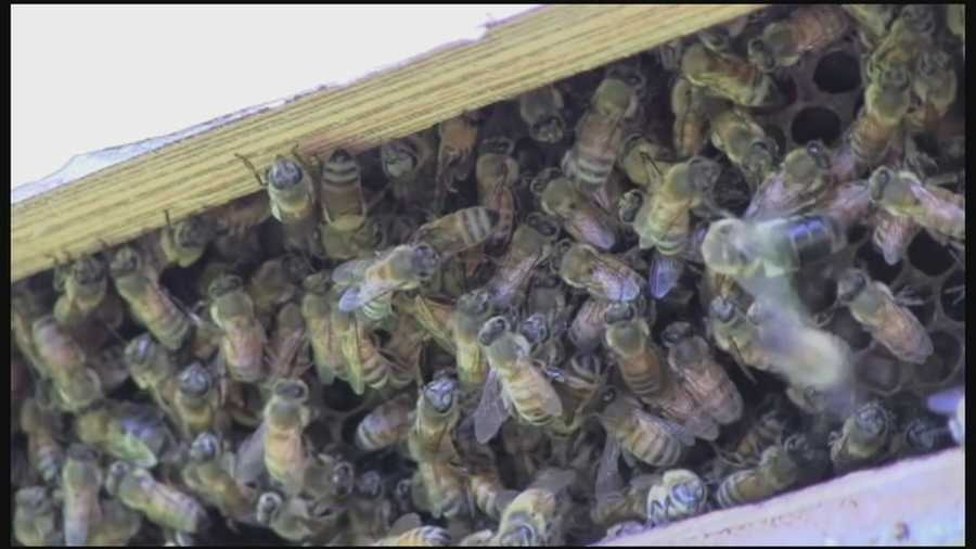 Thousands of bees were removed Saturday from a 98-year-old woman's home in Cocoa Beach.