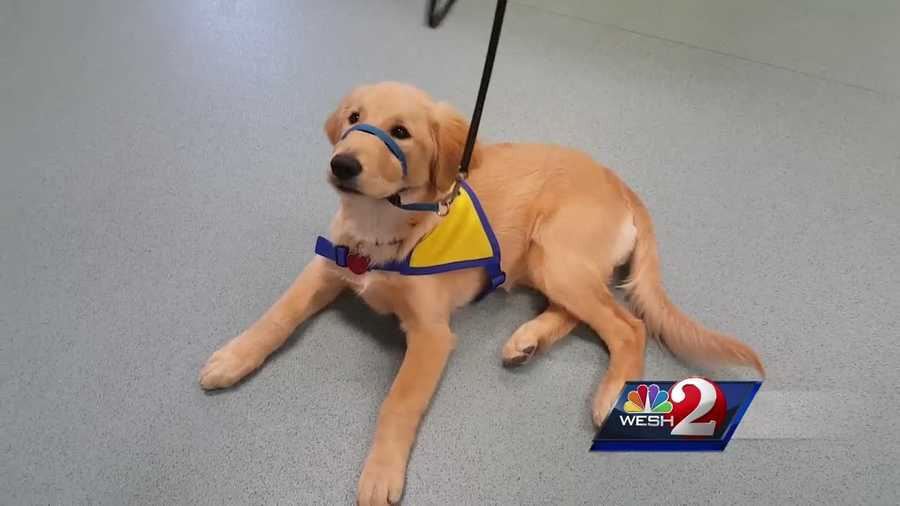 Hundreds of people came out Saturday to Canine Companions for Independence in Orlando to meet the new person in charge.