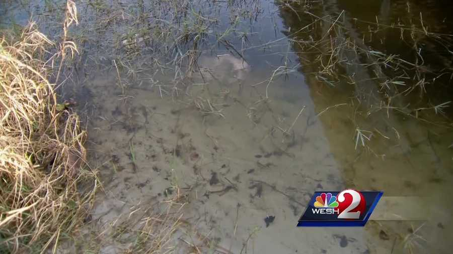 Very high levels of fecal coliform bacteria have been found in a local lake. WESH 2's Chris Hush (@ChrisHushWESH) investigates.