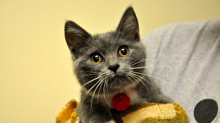 June will be put up for adoption at the Racine campus of the Wisconsin Humane Society.