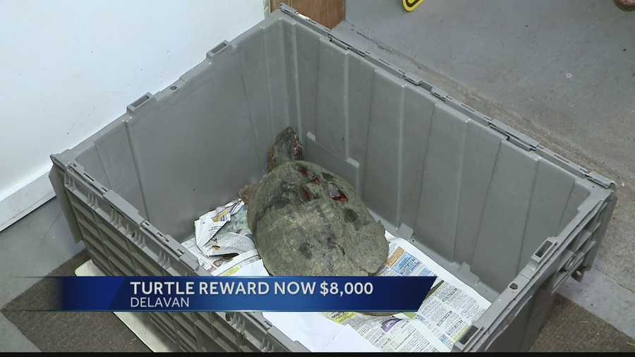 Rewards of $8,000 total are being offered for information regarding the beating of a snapping turtle at a Delavan golf course last week.