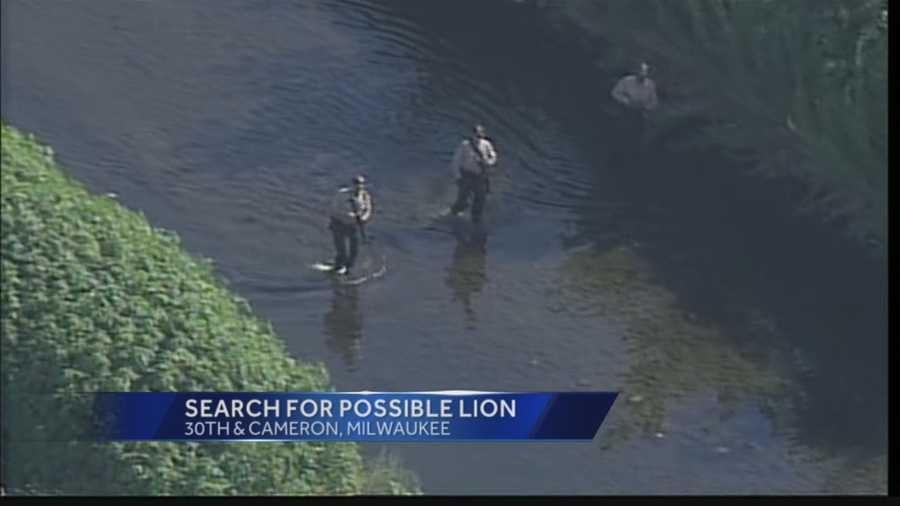 There was a confirmed sighting of a 'lion like animal' Saturday evening on Milwaukee's North side.
