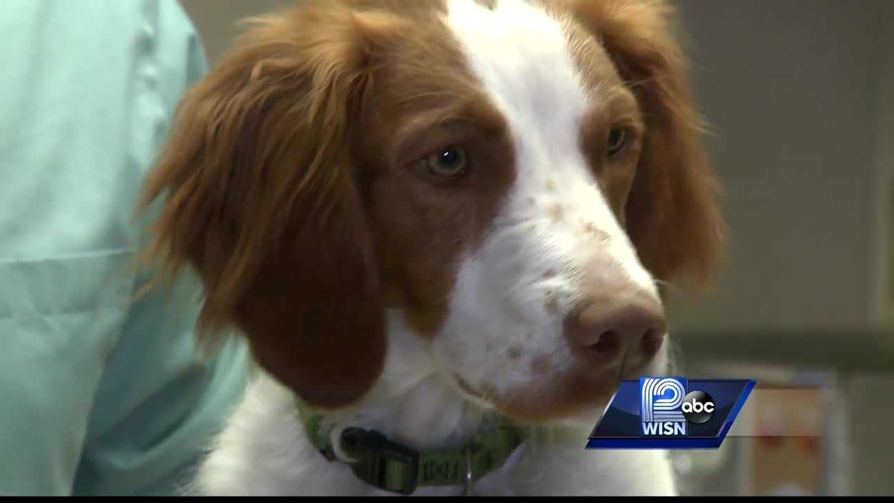 WISN 12 News' Mike Anderson reports what pet owners can do to protect their dogs from getting the highly contagious strain of dog flu.