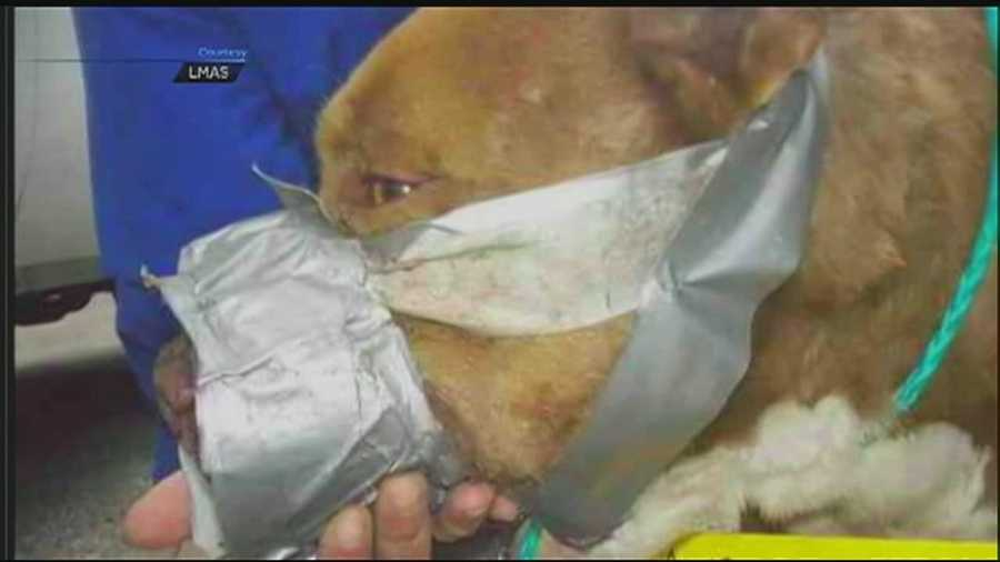 Officials say dog fighting in Jefferson County has become so prevalent that law enforcement officials received training to help fight the problem.