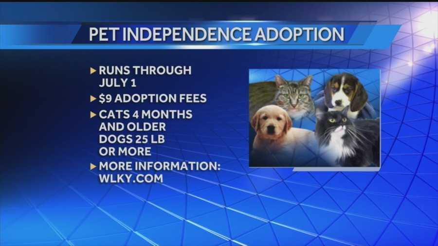 Kentucky Humane Society holds Pet Independence Adoption Special