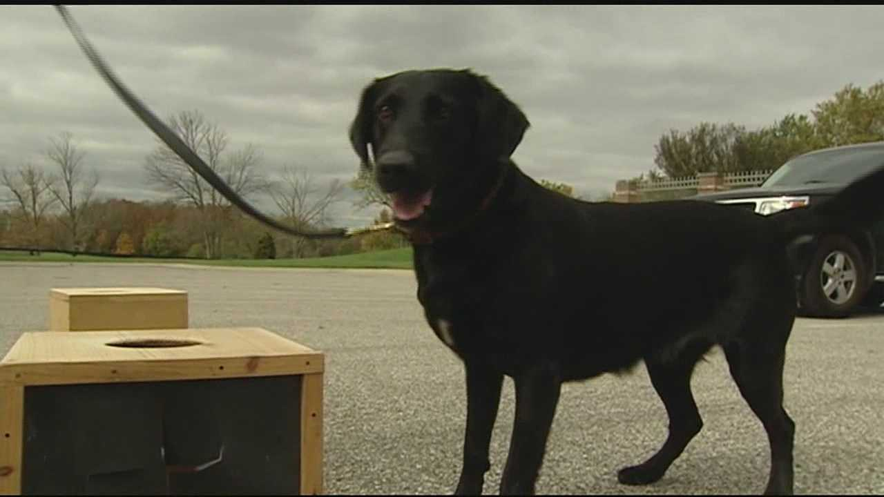One day before Sadie the dog was set to be put down, she was rescued and is now combating crime.