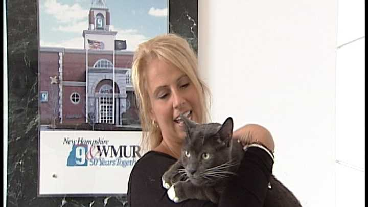To Adopt Rocky contact the Animal Rescue Network of New England:603-233-4801 ; www.ARNNE.org