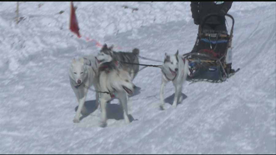 The dogs were off and running in Laconia on Friday for this weekend's 86th World Championship Sled Dog Derby.