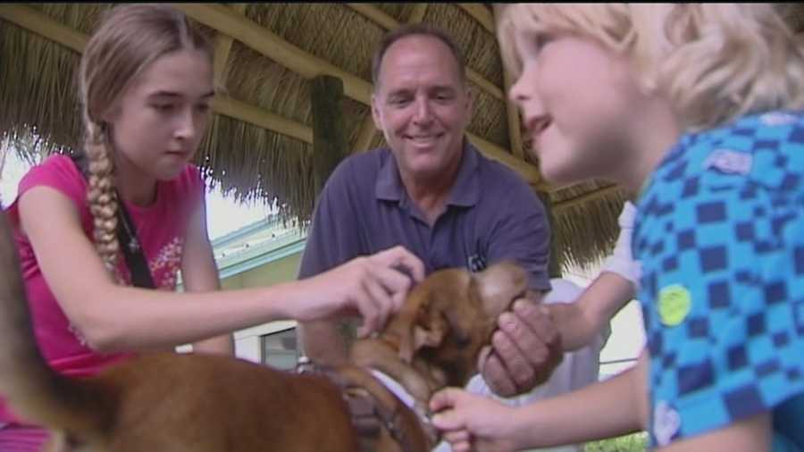 A Palm Springs family meets Survivor, a dog that was thrown from a moving truck, for the first time.