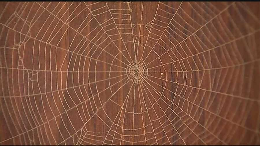 A central Vermont man's admiration for spiders has fueled a nearly 40-year-old backyard business.