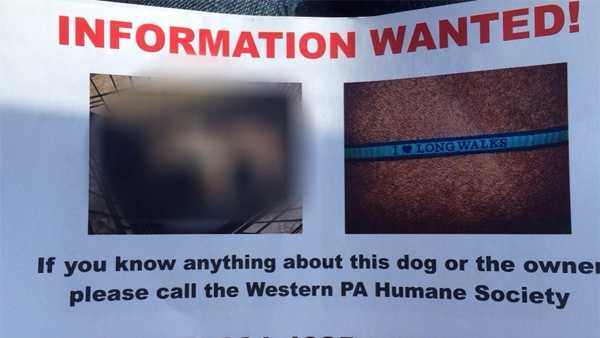 The frozen body of a small Shih-tzu was found in a cage covered by a sheet in Spring Hill. WTAE has blurred the image of the dead animal on this flyer.