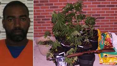 Left: Bobby Lee Reaves. Right: Marijuana seized during home search.