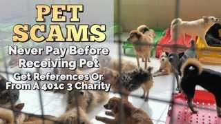 Pet scams are on the rise during COVID-19 pandemic