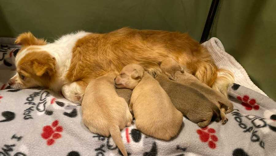 Mother adopts orphaned pups