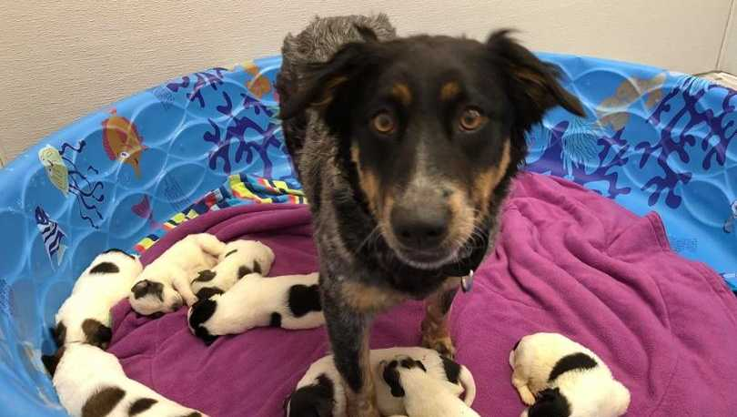 Dog found tied to Iowa telephone pole has puppies