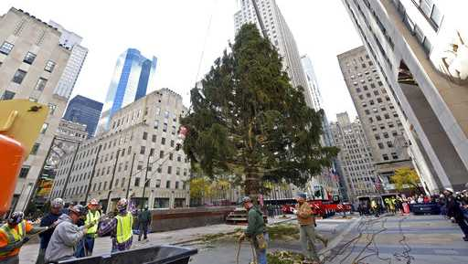 Workers raise the 2018 Rockefeller Center Christmas tree, a 72-foot tall, 12-ton Norway Spruce from Wallkill, N.Y., Saturday, Nov. 10, 2018, in New York. The 86th Rockefeller Center Christmas Tree Lighting ceremony will take place on Wednesday, Nov. 28.
