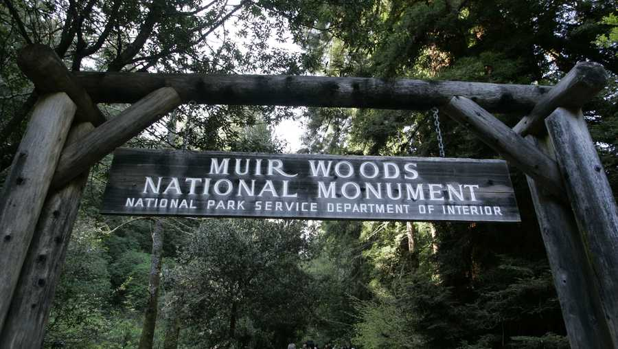 FILE - Authorities say a Redwood tree fell and fatally struck a man visiting Muir Woods National Monument Park on Christmas Eve Dec. 24, 2019. (AP Photo/Eric Risberg,File)