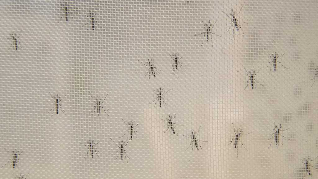 Massachusetts well being officers report season's first EEE optimistic mosquito pattern - WCVB Boston thumbnail