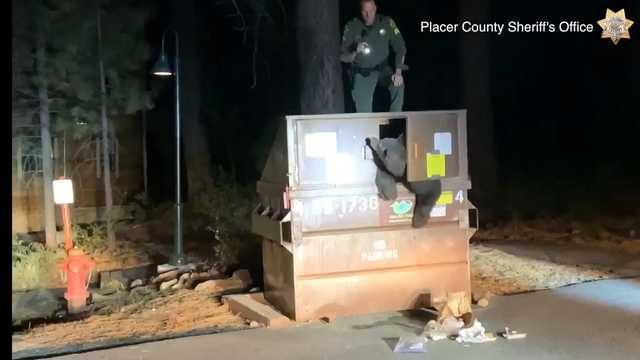 Video: Placer County deputies rescue bear from dumpster