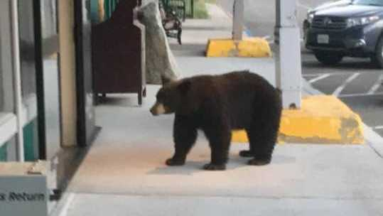Bear wanders into City Hall in South Lake Tahoe
