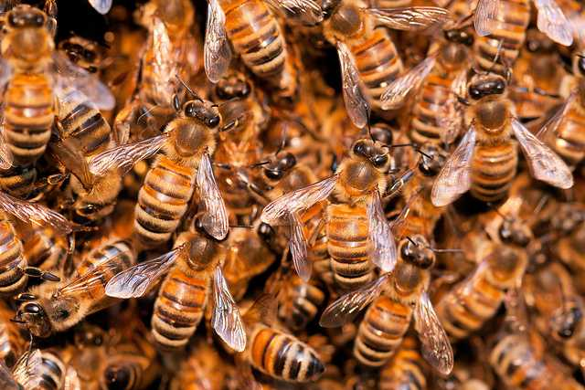 A couple heard buzzing in their bedroom; the culprits turned out to be 80,000 bees thumbnail