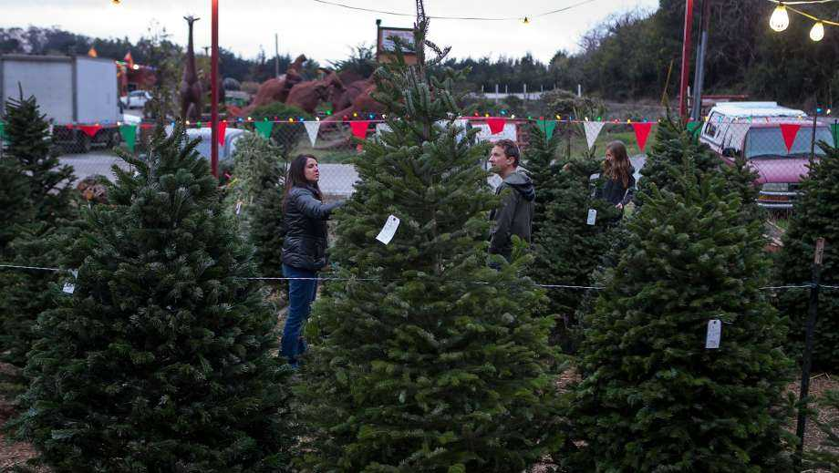 Amazon plans to sell and ship fresh, full-size Christmas trees this year. They'll go on sale in November and be sent within 10 days of being cut.