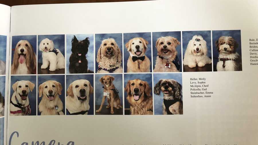 These therapy dogs are part of the yearbook at Marjory Stoneman Douglas High School.