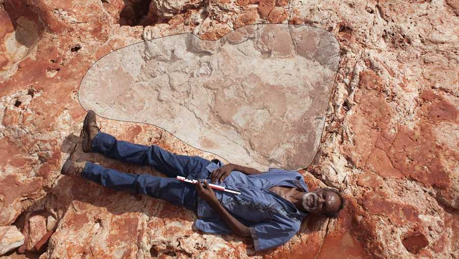 Richard Hunter lies alongside a 1.75 meter (5 foot 9 inch) sauropod track in the Lower Cretaceous Broome Sandstone, Walmadany area, Dampier Peninsula, Western Australia. The sauropod that made these tracks would have been around 5.4 meters (17 feet 9 inches) high at the hips.