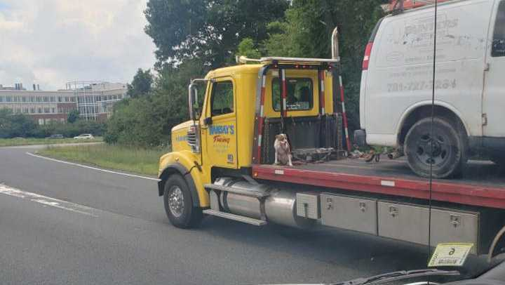 This picture shows a dog tied to the back of a moving tow truck, which is also hauling a van on Route 128 south, on July 17, 2019.