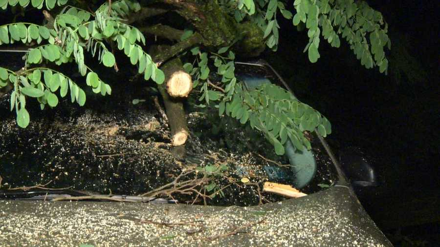 Large tree comes down on vehicles in Sharpsburg