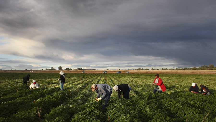 "the trump administration will make it easier for certain seasonal workers who are ""essential to the us food supply chain"" to remain in the country by temporarily amending visa requirements"