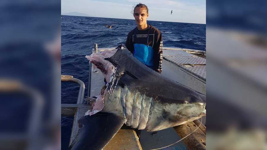 A huge mako shark caught by an Australian fisherman was half-devoured by an even bigger predator.