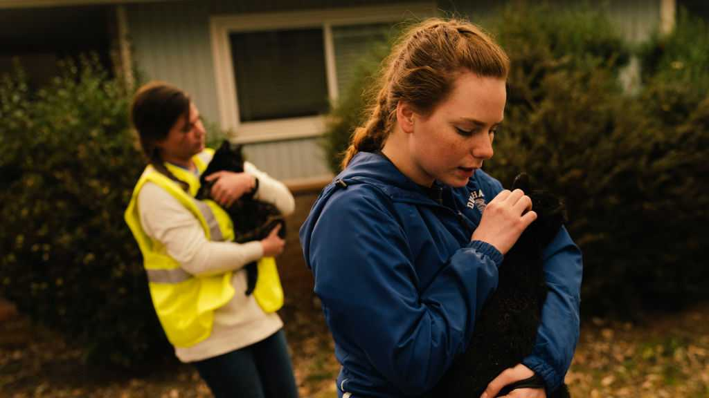 Samantha Esau, 19, of Chico, Emily Garcia of Magalia take in stray cats from an evacuated home in Paradise, California on November 12, 2018. As of Monday morning, Camp Fire is at 113,000 acres with 25% containment.